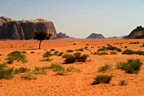 2 desert