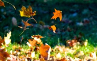 3 autumn